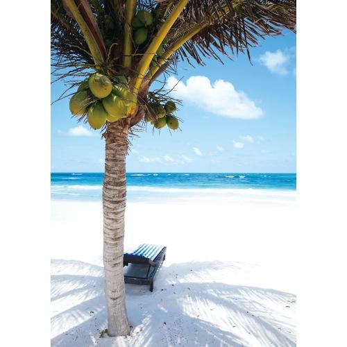 椰子の実るビーチ